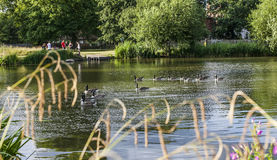Clapham Commons, London - the pond. This picture shows a pond in Clapham Commons in London royalty free stock photo