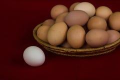 Clara de huevo y muchos huevos coloreados en la placa Imagen de archivo
