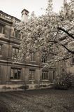 Clare College Cambridge Stock Images