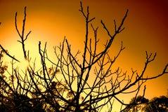 Free Clare Orange Morning Stock Photo - 5712060