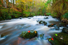 Clare River. The Clare River flows through Clare Glens on Tipperary and Limerick border, Ireland Royalty Free Stock Image