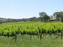 Clare valley in south Australia Stock Photo