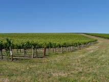Clare valley in south Australia Royalty Free Stock Image