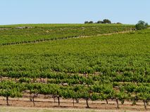Clare valley in south Australia Royalty Free Stock Photo
