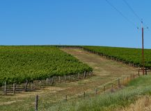 Clare valley in south Australia Stock Images