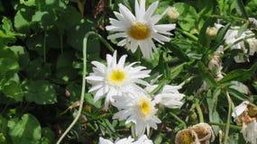 Clarear a beleza das flores Imagens de Stock