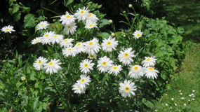 Clarear a beleza das flores Fotos de Stock
