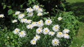 Clarear a beleza das flores Fotografia de Stock Royalty Free