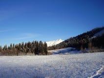 Clareira coberto de neve na floresta do inverno no fundo do céu azul brilhante imagens de stock