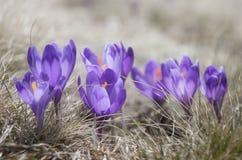 Clareira com flores Foto de Stock