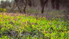 A clareira da florescência floresce na mola o parque, flores coloridas floresce na floresta video estoque