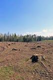Clareira da floresta após o felling das árvores Foto de Stock