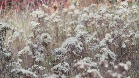 Clareira do outono das flores filme