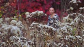 Clareira do outono das flores video estoque