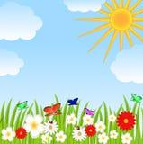 Clareira floral, céu azul e sol Imagem de Stock