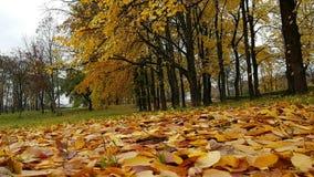A clareira no parque do outono cobriu as folhas amarelas caídas video estoque