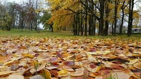 A clareira no parque do outono cobriu as folhas amarelas caídas vídeos de arquivo