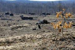 Clareira vazia da floresta após o fogo e o corte Fotografia de Stock