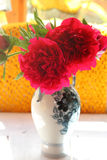 Claret peonies in a vase Stock Photos