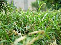Claridad de la hierba Fotos de archivo