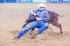 Clark County Fair och rodeo Arkivbild