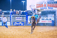 Clark County Fair och rodeo Arkivfoton