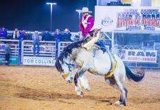 Clark County Fair och rodeo Royaltyfria Bilder