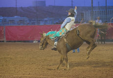 The Clark County Fair and Rodeo Stock Image