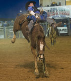 The Clark County Fair and Rodeo Royalty Free Stock Images