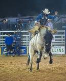 The Clark County Fair and Rodeo Stock Photos