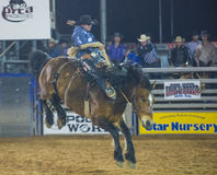 The Clark County Fair and Rodeo Royalty Free Stock Photo