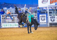 Clark County Fair and Rodeo. LOGANDALE , NEVADA - APRIL 10 : Cowboy Participating in a Bucking Horse Competition at the Clark County Fair and Rodeo a Royalty Free Stock Photos