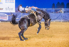 Clark County Fair and Rodeo Royalty Free Stock Image