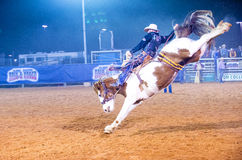Clark County Fair and Rodeo. LOGANDALE , NEVADA - APRIL 10 : Cowboy Participating in a Bucking Horse Competition at the Clark County Fair and Rodeo a Stock Image