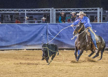 Clark County Fair and Rodeo. LOGANDALE , NEVADA - APRIL 10 : Cowboy Participating in a Calf roping Competition at the Clark County Fair and Rodeo a Professional stock photos