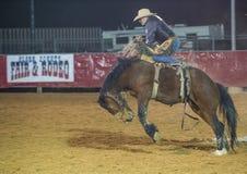 Clark County Fair und das Rodeo Lizenzfreies Stockbild