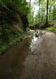 Clark Creek Natural Area stockbilder