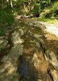 Clark Creek Natural Area lizenzfreies stockbild