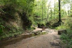 Clark Creek Natural Area stockbild