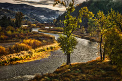Clark Fork River Western Montana. The Clark Fork River in Western Montana, wirh fall colors of yellow and gold and a cloudy sky. Cottonwoods in fall colors Stock Photography