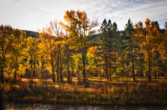 Clark Fork River Western Montana Royalty Free Stock Photography