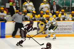 Clarkson #37 in NCAA Hockey Game Royalty Free Stock Image