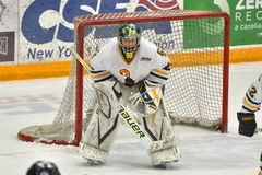 Clarkson Paul Karpowich in NCAA Hockey Game Stock Photography
