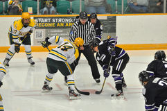 Clarkson University in NCAA Hockey Game Royalty Free Stock Image