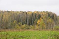 Claro al borde del bosque del abedul amarillo, cielo lluvioso nublado de la hierba verde en Ucrania en otoño Imagen de archivo libre de regalías