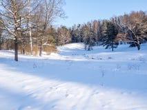 Claro con el bosque iluminado por el sol del invierno Fotos de archivo libres de regalías