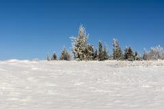 Claro cubierto con nieve Fotografía de archivo