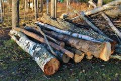 Claro de la silvicultura Fotografía de archivo