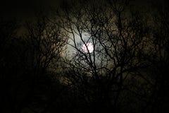 Claro de luna Fotos de archivo libres de regalías