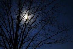 Claro de luna en un árbol Imagen de archivo libre de regalías